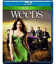 WEEDS - 6° TEMPORADA